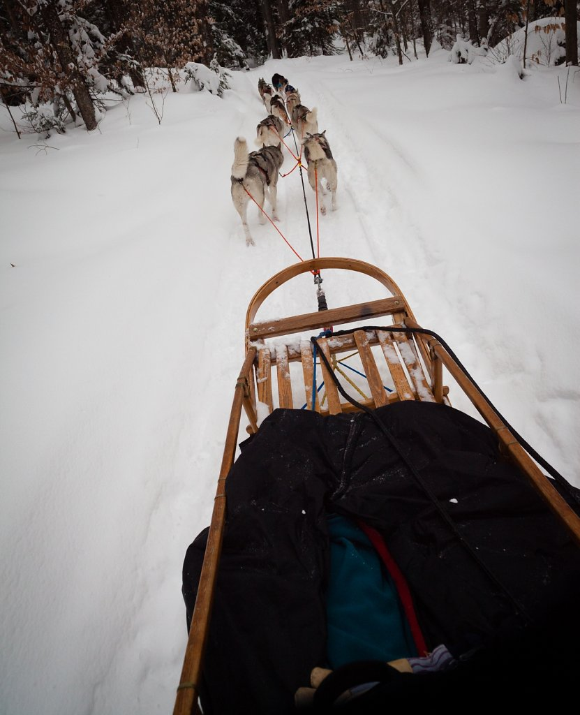 Husky Works Mushing
